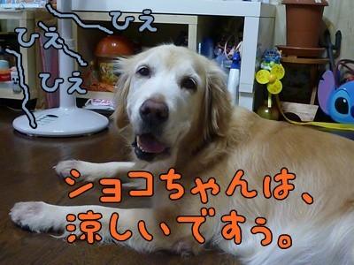1.ひえひえ01.jpg