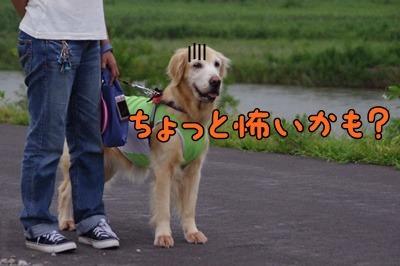 1.花火大会02.jpg