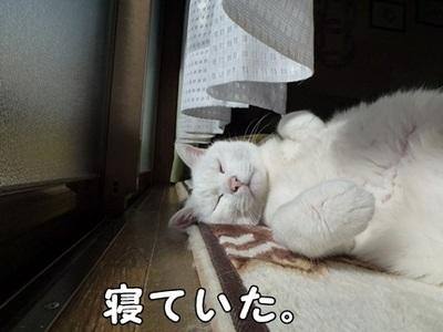 1,ダイジェスト13.JPG