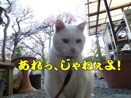 1,大平山10.JPG