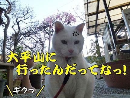1,大平山11.JPG