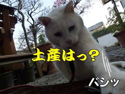 1,大平山12.JPG