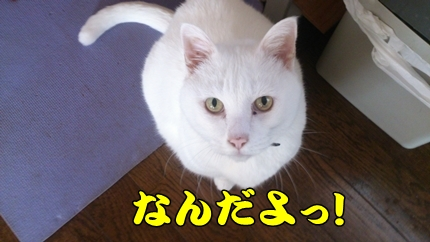 1,H25大平プラッツ11.jpg
