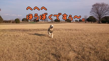 1,H26年放牧01.jpg