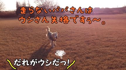 1,H26年放牧04.jpg