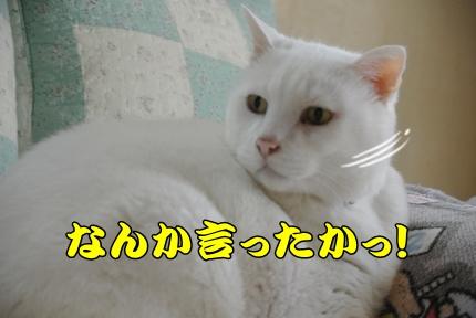 1,H26年放牧07.JPG