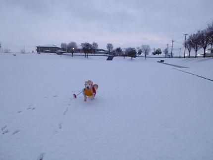1,H26年雪02.JPG
