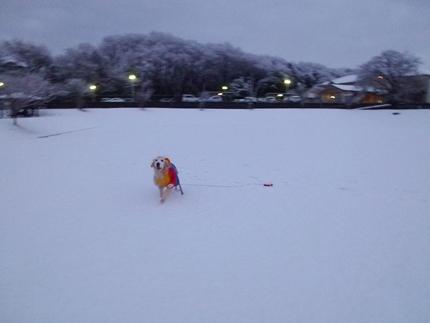 1,H26年雪05.JPG