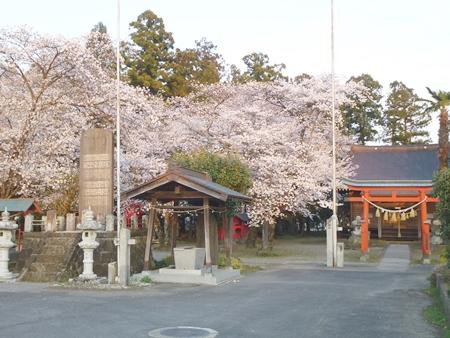1,H26桜08.JPG