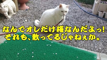 1,H26桜16.jpg