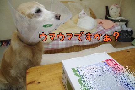 1.新米09.jpg