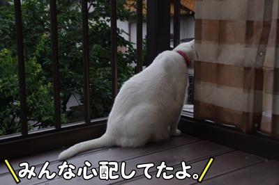 1.花火大会14.jpg