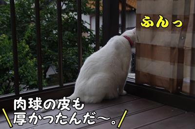 1.花火大会15.jpg