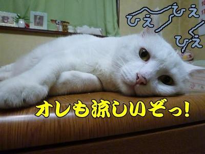 1.ひえひえ02.jpg