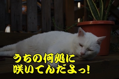 1.スヌーピー05.jpg