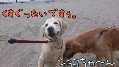 1,新潟06.jpg