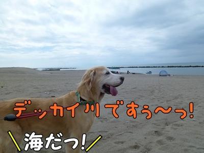 1,新潟09.JPG
