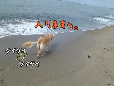 1,新潟10.JPG