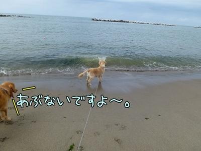 1,新潟12.JPG