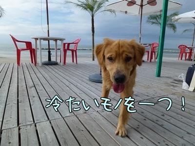 1,新潟25.JPG