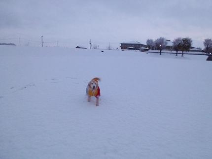 1,H26年雪03.JPG