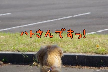 1.新米04.jpg
