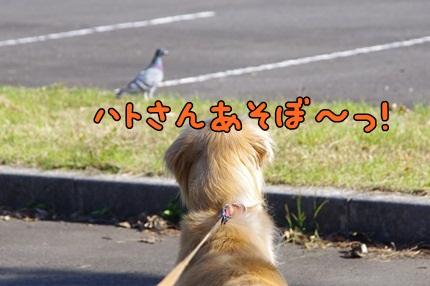 1.新米05.jpg