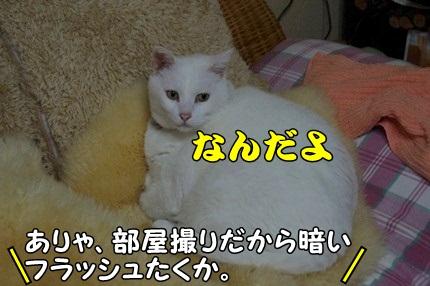 1.新米07.jpg