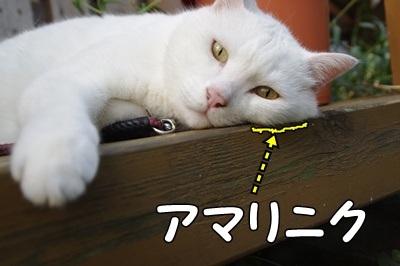 1.スヌーピー08.jpg