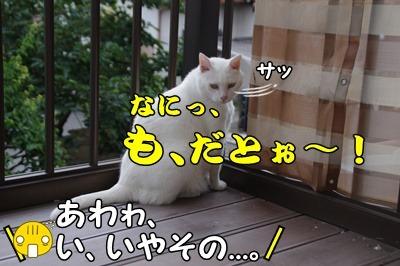 1.花火大会16.jpg